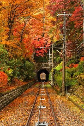 ハイキングを楽しみながら紅葉を楽しむスポットといえば高尾山。ケーブルカーからみえるこの景色は絶景!見頃は毎年11月中旬頃