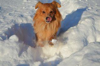 Gårdstunet Hundepensjonat: Kald dag på tunet - men moro med snø ! Herlige hun...