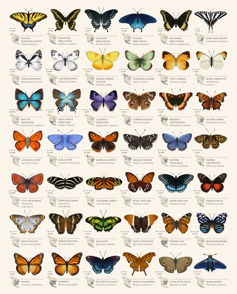 Butterflies of North America // Naturalism esthetics for ship types mapping!