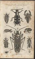 Microscopic Objects Animal Kingdom Mite Louse Flea 1790 antique engraved print