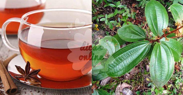 Chá de canela-do-velho: a cura natural para dores articulares!