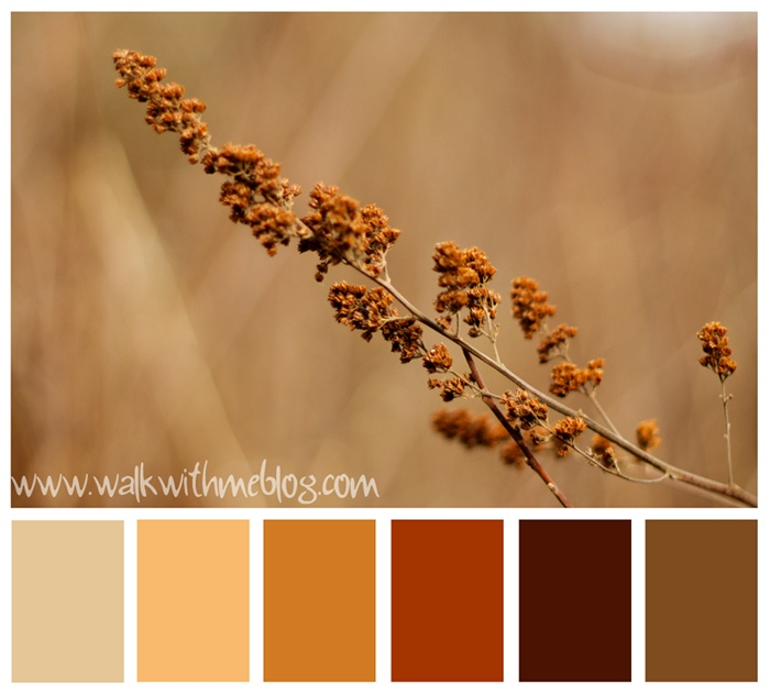 colors for the kitchen?? or living room? maybe too dark...