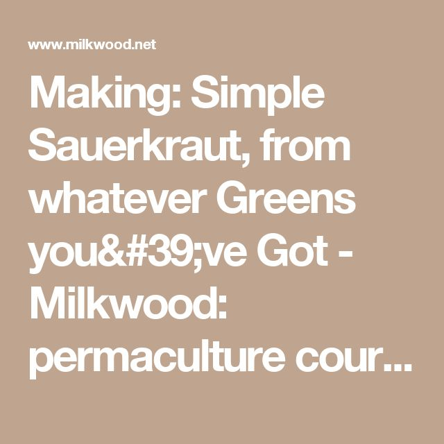 Making: Simple Sauerkraut, from whatever Greens you've Got - Milkwood: permaculture courses, skills + stories