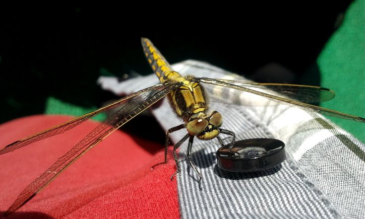 A Curious Dragonfly II, by Rainer Långstedt
