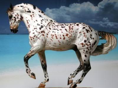 FS Christian, bay leopard Knabstrupper stallion, AR Lohengrin