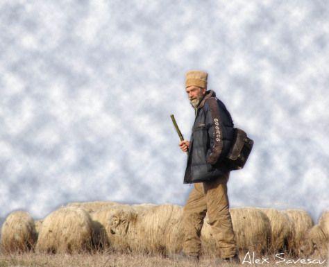 cioban cu oile lui