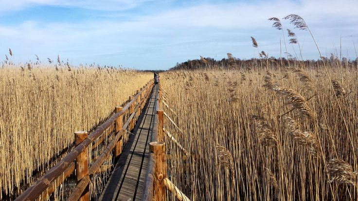 Ķemeri National Park, Latvia