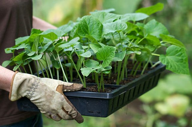 When Should I Plant What? | The Garden Glove