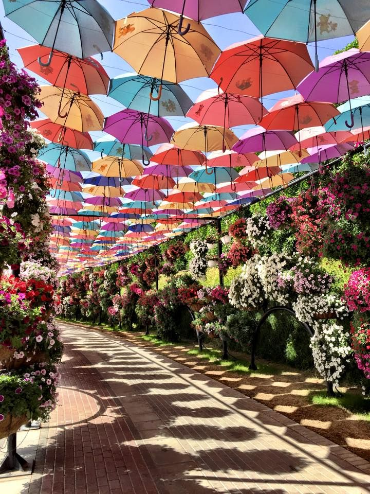 Dubai Miracle Garden - the umbrellas would be amazing for a garden party! http://www.jetradar.com/?marker=126022