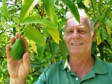 Can you grow Avocados in Texas? YES, yoy can!