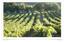 Breedekloof (...our beautiful wine area) The neighbouring wine estate is Bergsig. They have numerous award winning wines with an award tally of over 100 awards, trophies and medals. They have a lovely Bistro overlooking the vineyards.