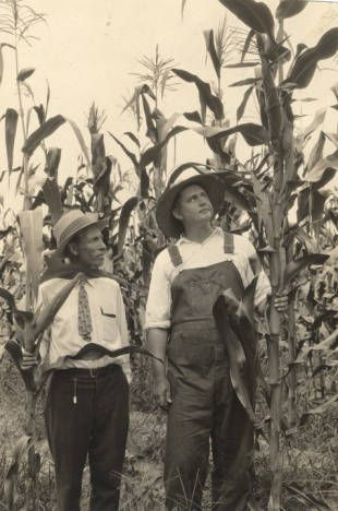 Farmer and an agricultural extension agent examining corn in a field. :: Alabama Photographs and Pictures Collection