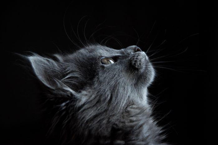 1001 Images Pour Choisir Le Plus Beau Fond D Ecran Tumblr Comportement Chat Animales Faits De Chat