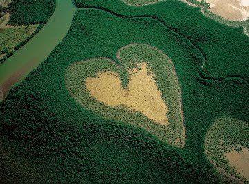 Heart-Shaped Mangrove, Voh, New Caledonia