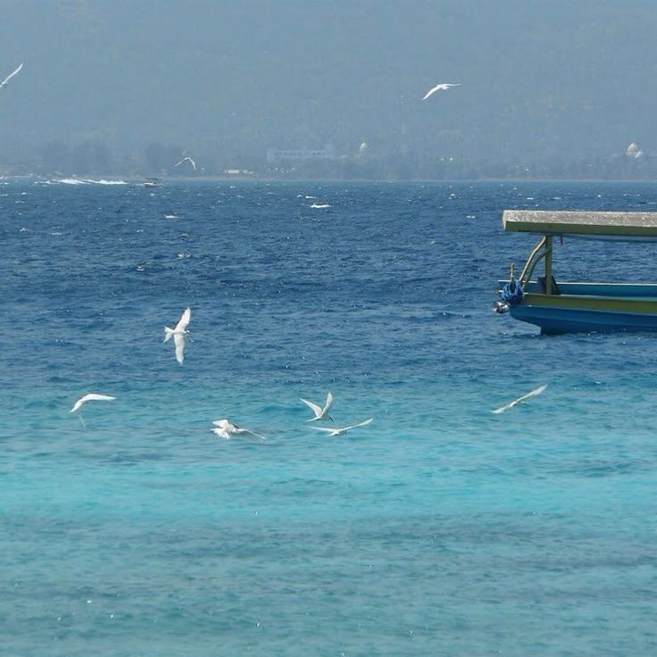 Although the boat to Gili was our least favourite experience in Indonesia  just look at that sea ! While we waited for our fast boat these birds flying around the anchored boats were a delight to capture. #vitaminsea