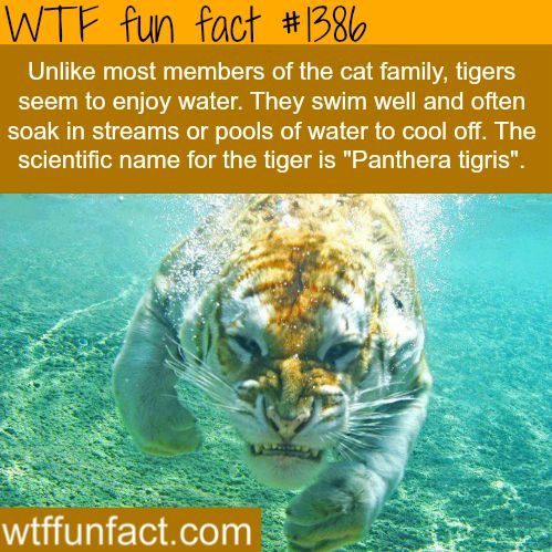 142 best images about Animal Fun Facts on Pinterest | Interesting ...