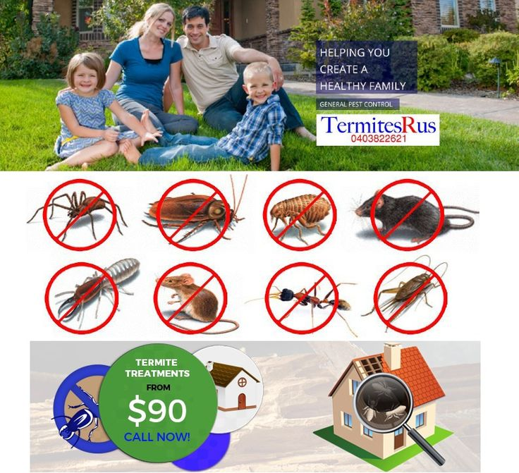 We cover all your #PestControl needs throughout Brisbane .No problem too big or small. Full 12 Month Warranty!