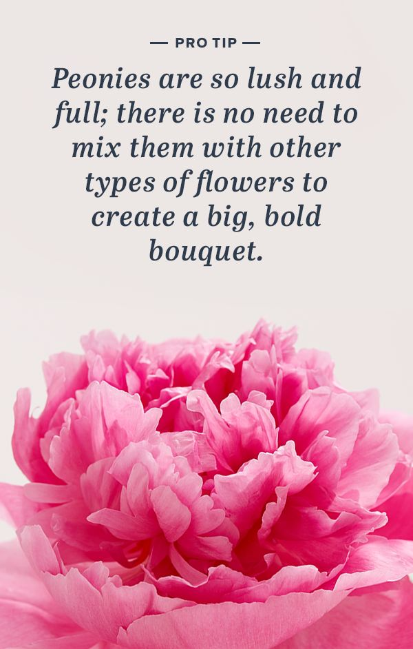 The Pink Peonies 56 best peony perfection images on pinterest | pink peonies