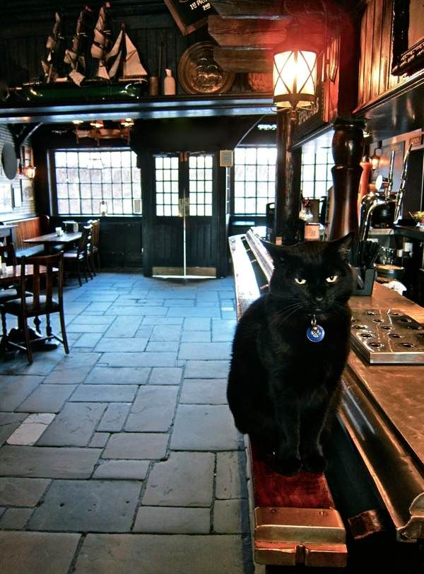 Been here, but missed the cat. The Prospect of Whitby
