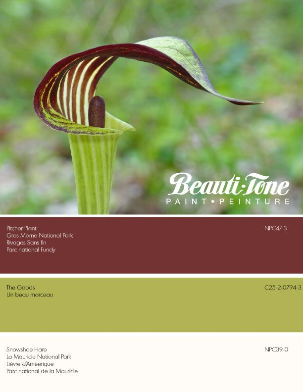A natural Canadian beauty, Jack in the Pulpit inspires a spring fresh Beauti-Tone colour scheme for our homes.