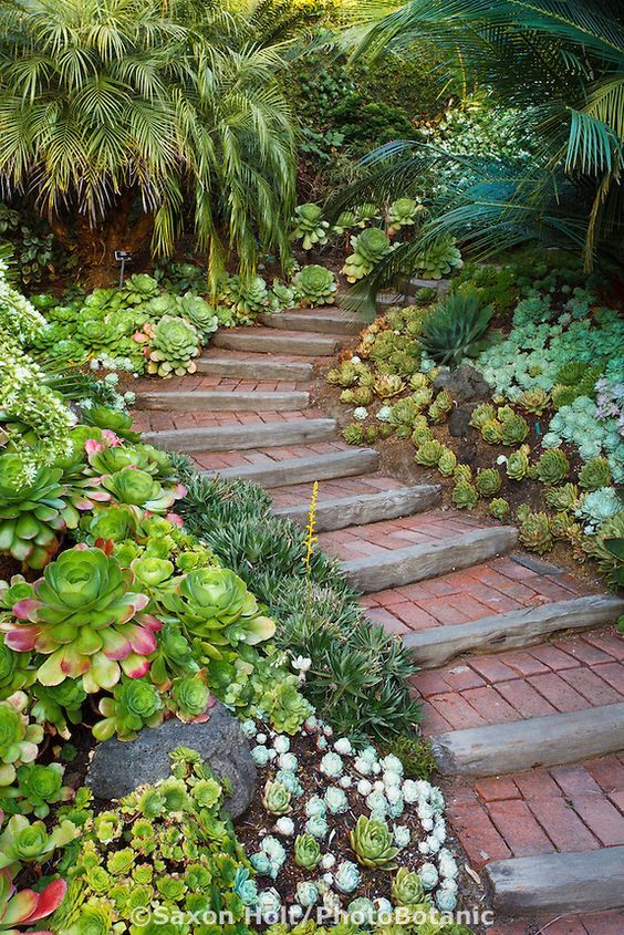 Stairs, steps going up walkway into California garden with succulent groundcover mix
