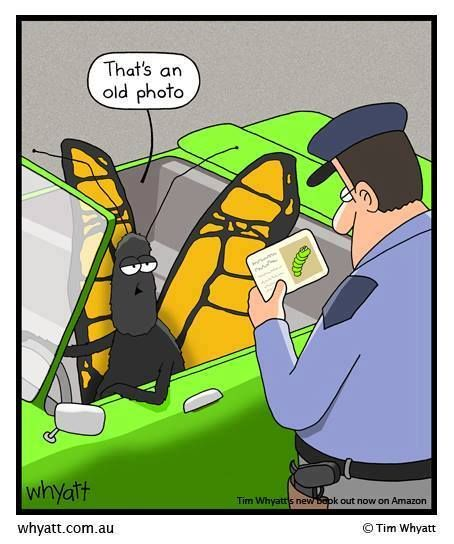a little butterfly silliness...