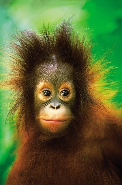 Mogli - Nature Reserve  Shangri-La's Rasa Ria Resort, Kota Kinabalu