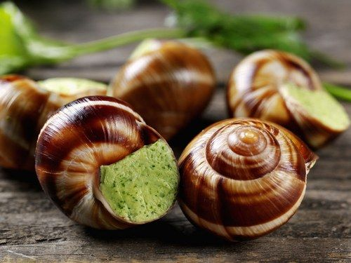 snail bourguignon #recipes #snail #snails #dish #cuisine #cooking #nature #animals #fitness #escargot #lumaca #chiocciola #caracoles #schnecke