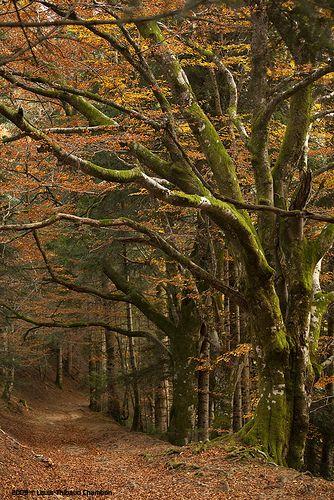 La Bourboule - Puy de Dôme - Auvergne - the first place I lived in France - wonderful memories!