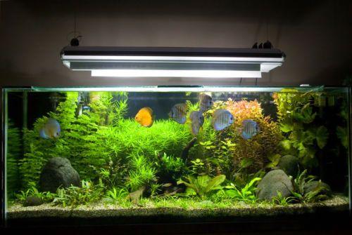 Powerful Aquarium light for planted tank