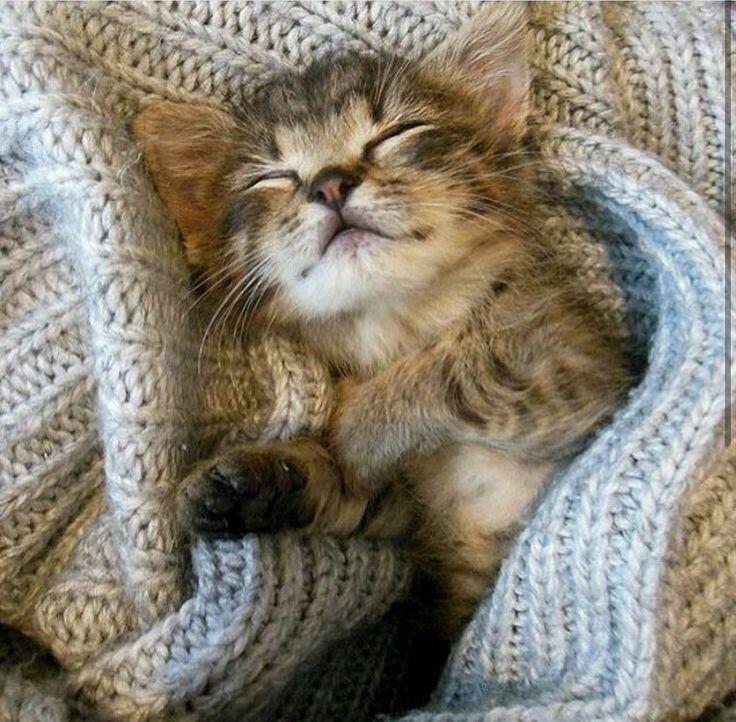 "Snug as a ""BUG"" Süße katzen, Katzen, Tiere"