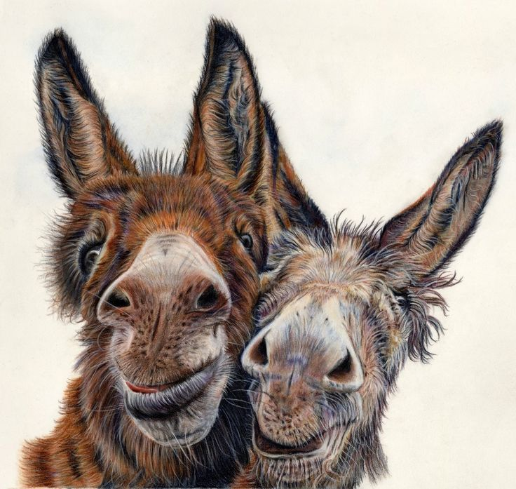 """'Hee Haw' by Lisa Ann Watkins. Faber Castell coloured pencil on pastelmat 15 x 15"""""""