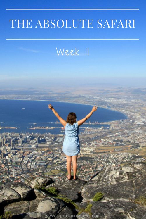 The Absolute Safari Week 11: South Africa - The Roaming Street