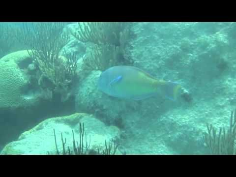 "UberVida presents ""Whole Day Dreaming"" Bermuda Cruise Snorkel Bermuda"