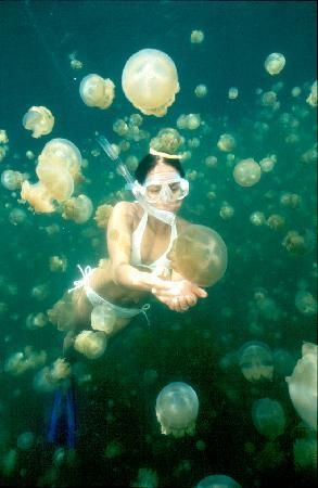 Swim in Jellyfish Lake in Palau. The lake was originally part of the ocean, but it was closed off and, over time, the jellyfish have lost the power to sting.
