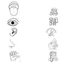 Resultado de imagen de fichas sobre el cuerpo humano para niños