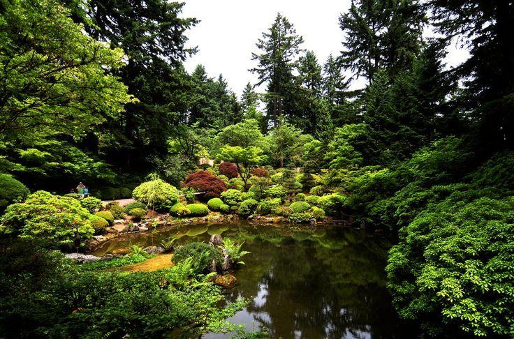 Landscape koi pond algae ideas with green water string for Koi pond algae