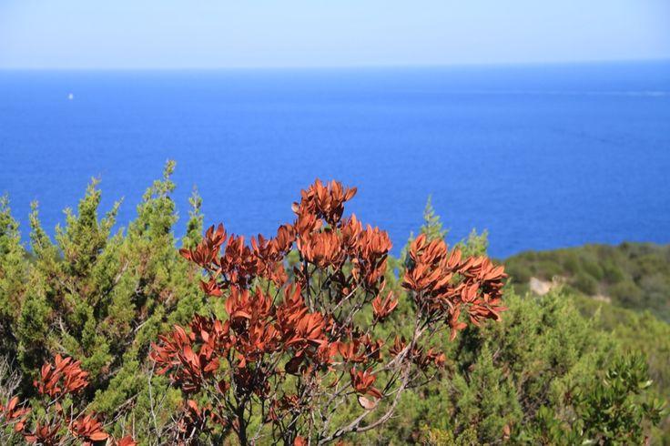 meravigliosa Sardegna, Cala Moresca, Golfo Aranci, parco di Capo Figari www.sardegnapleinair.it