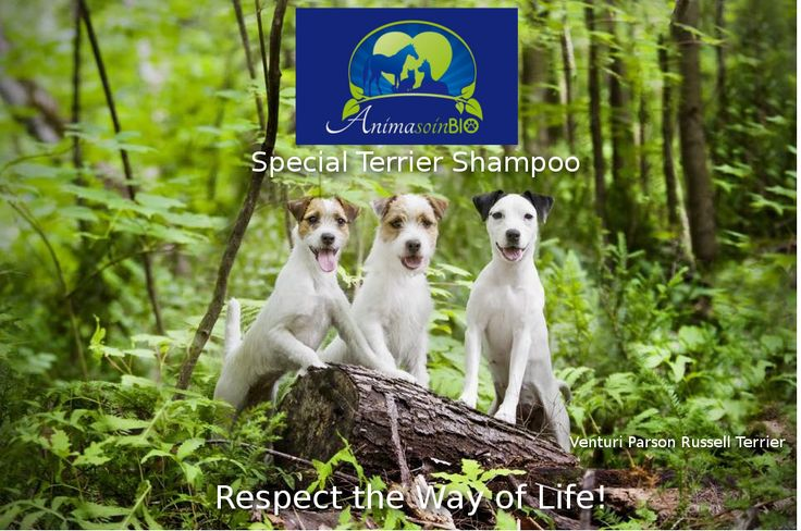 https://anima-soin-bio-canada.myshopify.com/collections/regular-shampoo-1/products/special-terrier
