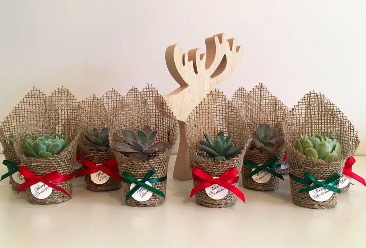 Christmas Succulent Favors by CandSBoutiqueShop on Etsy