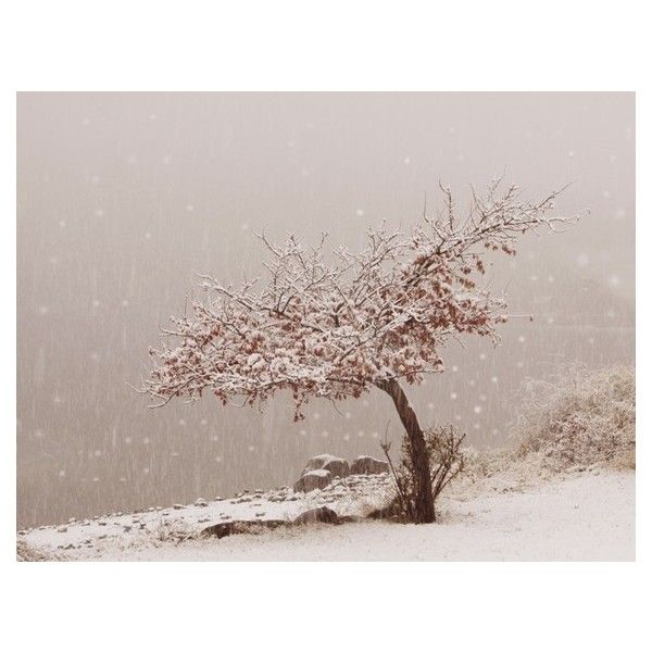 Fine Art Photography Snowflake Art Winter Art Snow Fall First Snow at... ❤ liked on Polyvore featuring home, home decor, white home decor, asian home decor and oriental home decor