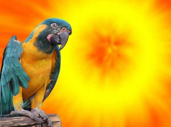 Do Salt Lamps Affect Blood Pressure : 269 best Macaw Parrots images on Pinterest