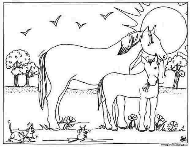 Best Printable Foal Coloring Pages 99 Amazing Coloring