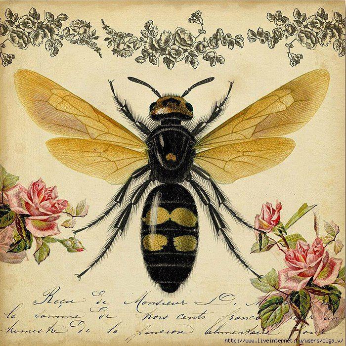 картинки для декупажа мед и пчелы внешность томный голос