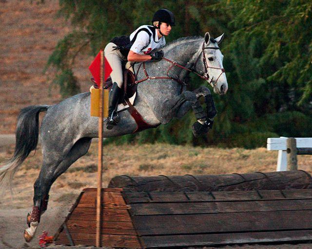 Musings of an Equestrian