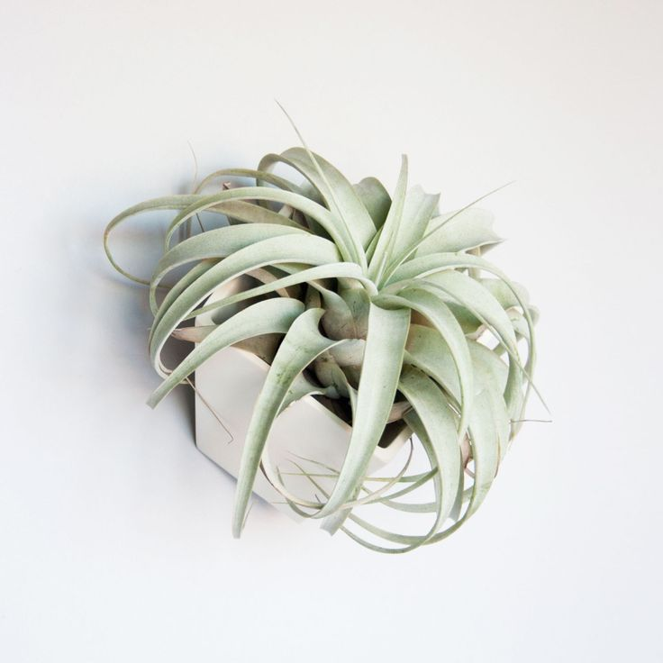 Cubist Tillandsia Planter | dotandbo.com