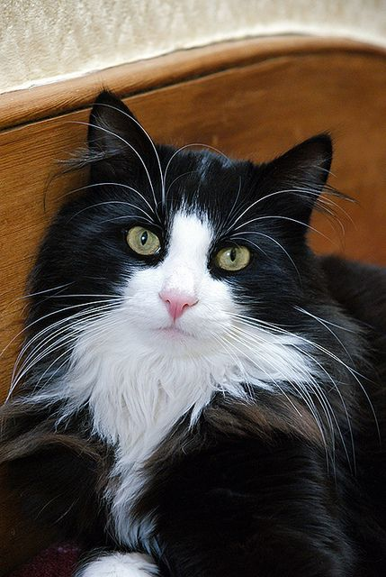 Gorgeous long hair tuxedo