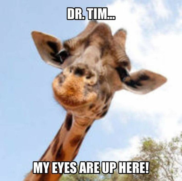 """Dr. Tim... my eyes are up here!"" April the Giraffe meme."