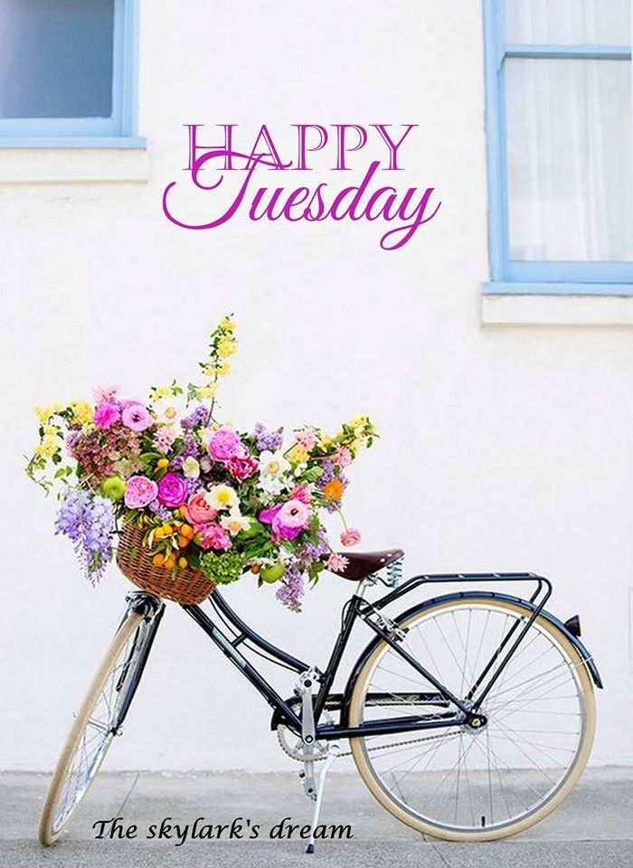 Pretty Happy Tuesday Quote good morning tuesday tuesday quotes good /morning…/ So pretty Thank you A xx ;-)