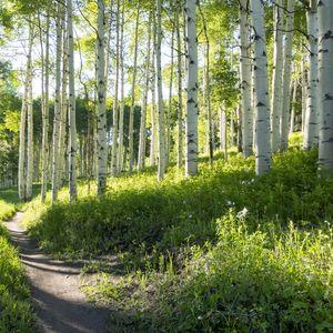 Birch Hiking Trail